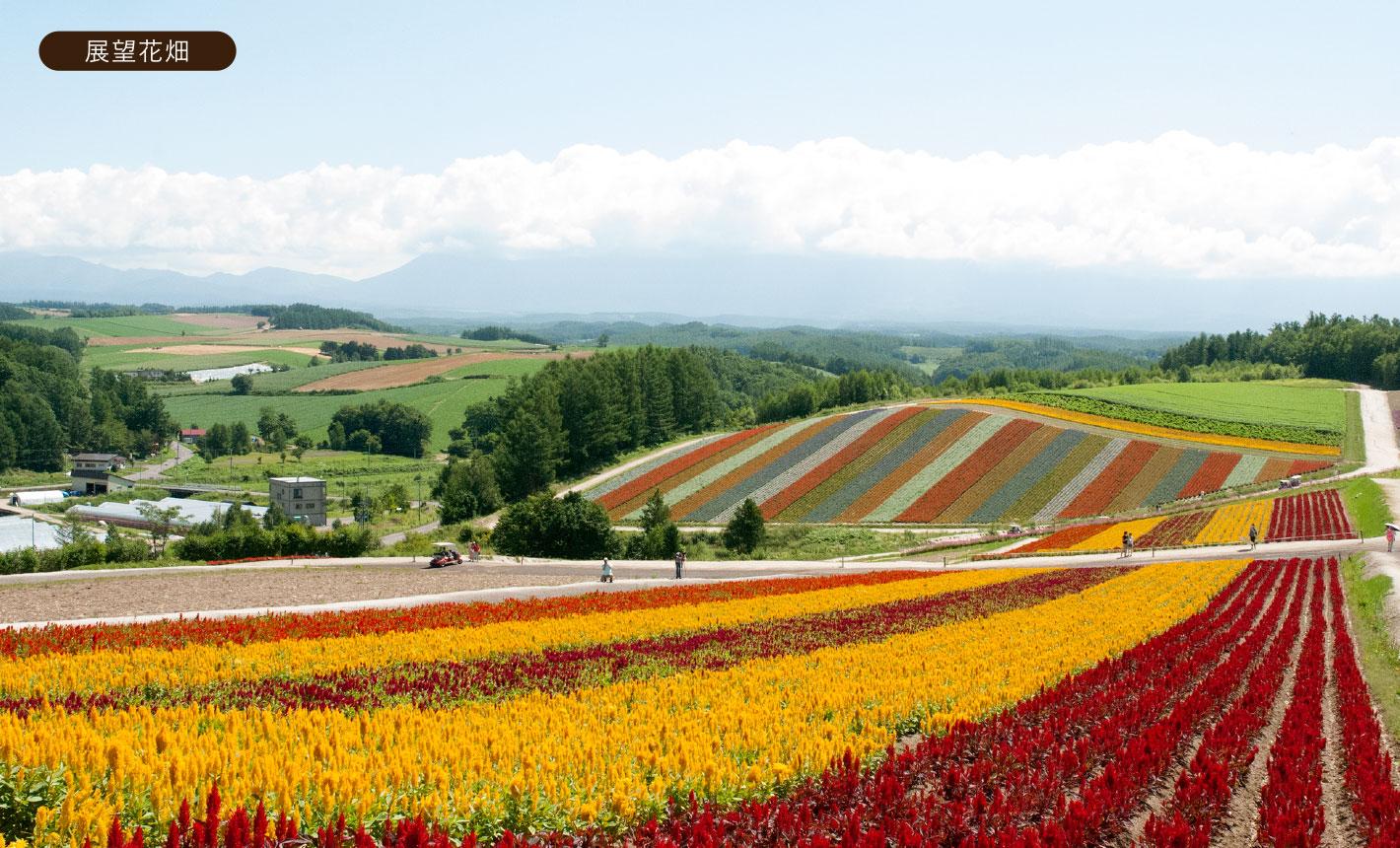 わたしたちについて - 展望花畑 四季彩の丘|北海道美瑛町の観光ガーデン