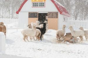 arpaca winter 06